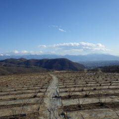 午後から冷たい風が吹き荒れるローズ畑