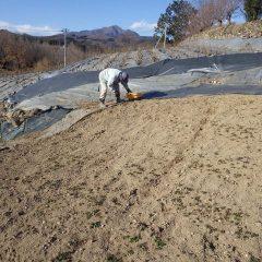 今年も除草作業が始まりました