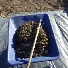 一輪車一台分の雑草を取り除きました