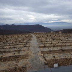 農場は今にも降り出しそうな重たい雲が立ち込めています