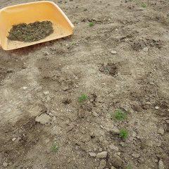 雑草が小さいうちに取ってしまうのが一番