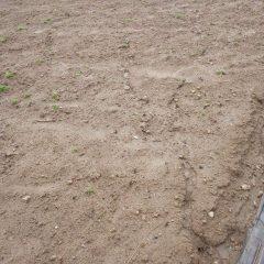 こちらの畑も斜面なので雨水が表土を流した跡が何本も出来ていました