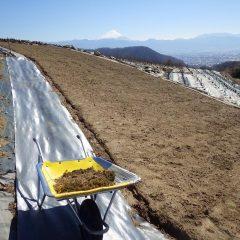 遠くで富士山も見守ってくれています