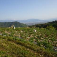 除草作業は陽が傾くまで続けられます