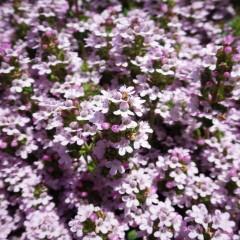 可愛い花が集まっています
