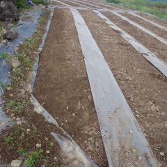種を蒔く畑の準備が終わりました