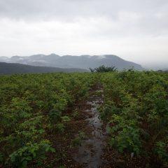 朝からシトシト雨の降る農場です