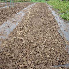 耕した畑にカモマイル・ジャーマンの種を蒔きます