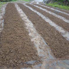 5列の畑に蒔き終わり雨が本降りになったので農場での作業は終了しました