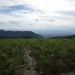 今日も雲の多い農場の空ですが恥ずかしがり屋の富士山が頭の先だけ出していました
