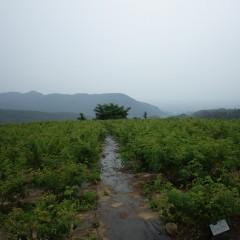 梅雨空に煙るローズ畑、今日は雑草取りも一休み