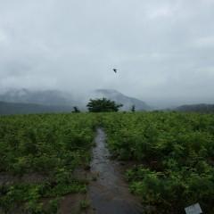 降ったり止んだり、雨の一日でした