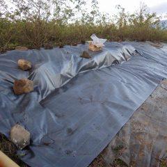 しっかりと石垣を覆って防草シートを張りました