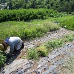 今日も今日とて除草作業の繰り返し