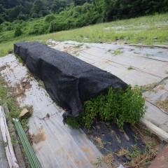 乾燥防止と日焼け防止で遮光ネットを張りました