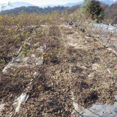 除草した草と切った枝の片付け作業