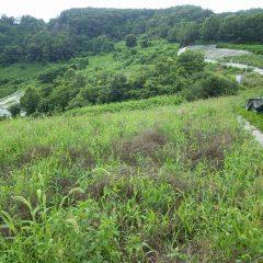 どの畑も雑草で覆われてしまいました