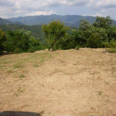 一つ目の畑の片付けが完了しました