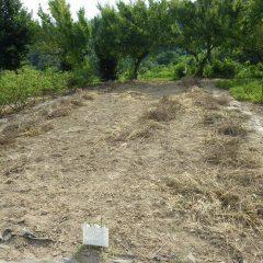 次の畑の除草した草の片付け