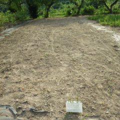 二つ目の畑の片付けが完了しました