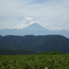 富士山の背後からは噴煙の様に入道雲がわき上がって来ました