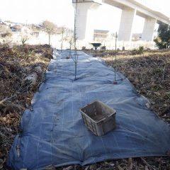 再び雑草に覆われない様に防草シートを敷きました