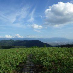 作業が終わる頃、ほんの少しだけ富士山が頭を出してくれました