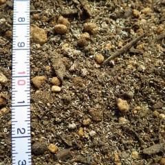種だけを均等に蒔くのは非常に大変なので培養土に混ぜて蒔きます