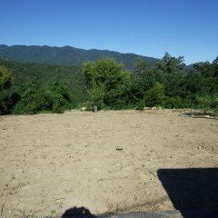 畑は綺麗になったものの何故か空しさを感じます