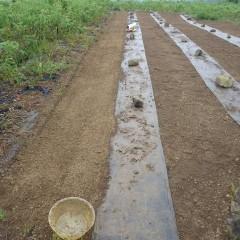 種を培養土に混ぜて直播きしました