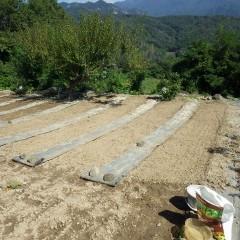 培養土に種を混ぜて均等に蒔きました