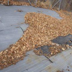 落ち葉の吹き溜まり
