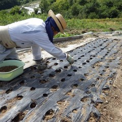 種を混ぜた培養土を1,200箇所の穴に入れてきます