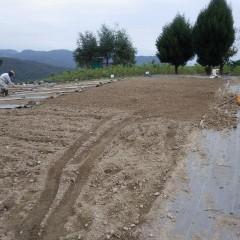 石や大きな土のかたまりを取り除き平らにします