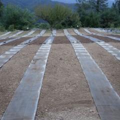 通路の防草シートを敷いて播種の準備が整いました