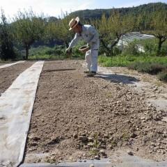 培養土に混ぜた種を均等に蒔きます