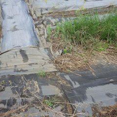 排水溝が畑から流れ出た土で埋まっていました