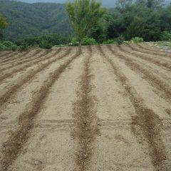 畝を立てる巾を線引きします