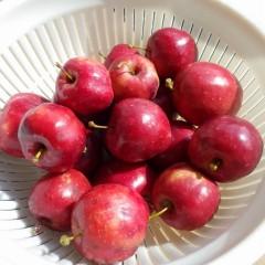 ピンポン玉よりも小さいリンゴですが汚れを洗い落とせば一丁前になりました