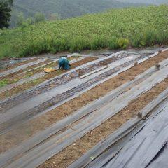 雨の中でも合羽を着て除草作業をしています