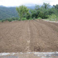 何とか畑に入れそうなので雨で中断した畝立て作業の続きをしました