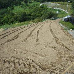 傾斜地のカモマイル・ジャーマン畑