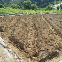 土を寄せて畝を作ります