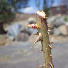 春の日差しを浴びて芽が伸び始めています