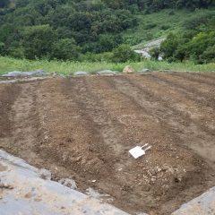 21日に種蒔きをしたカモマイル・ジャーマンの傾斜畑