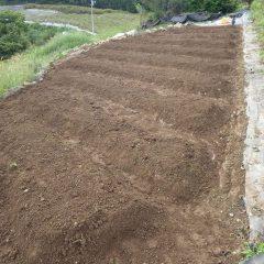 畝立て作業が終わり種蒔き準備完了