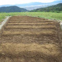 培養土に混ぜた種を蒔き終わりました