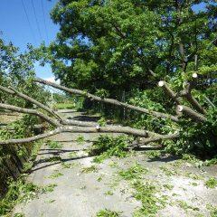 農場に続く農道を台風で倒れた木が塞いでいたので迂回しました