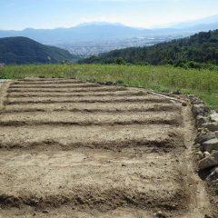 最後に種蒔きをしたカモマイル・ジャーマン畑