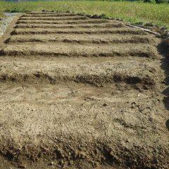 最後に種蒔きをしたカモマイル・ジャーマン三角畑